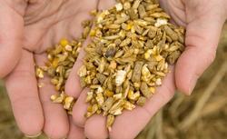 Biomasa: paliwo tanie i nowoczesne