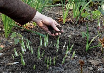 ZIEMIA OGRODOWA - co zrobić, by mieć urodzajną glebę w ogrodzie