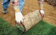 Trawnik z rolki - wykonanie krok po kroku
