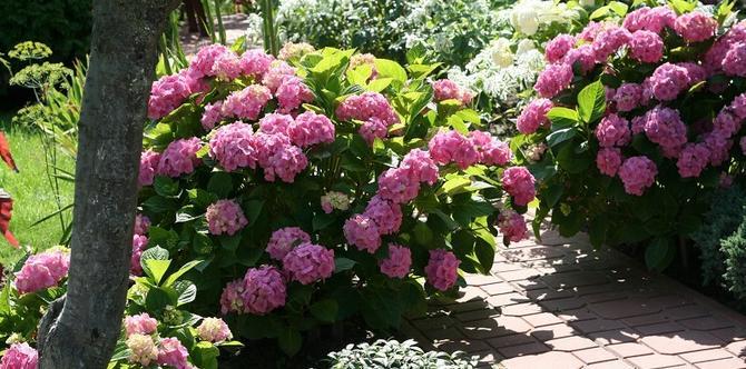 Hortensja czyli piękność w ogrodzie. Jak uprawiać hortensje?