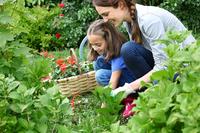 Jak stworzyć ekologiczny ogród na balkonie?