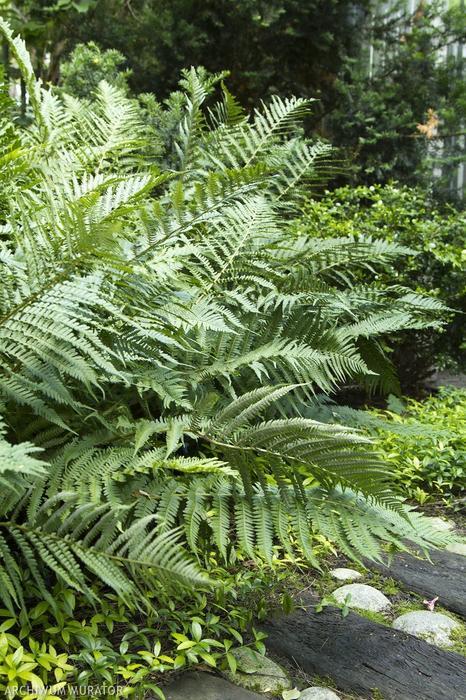 Rośliny pod drzewa. Jakie rośliny posadzić pod koronę drzew i krzewów?