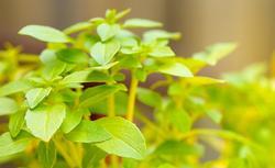 Ogródek ziołowy - sadzenie i pielęgnacja ziół w przydomowym ogrodzie
