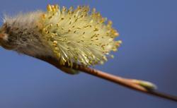 Marzec w ogrodzie: sadzenie żywopłotu, cięcie krzewów, przesadzanie roślin, pielęgnacja trawnika